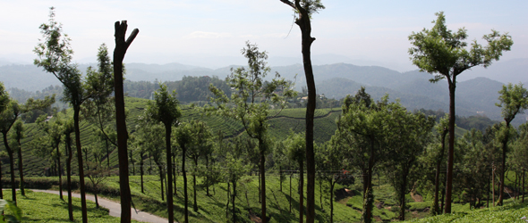 Travel Report: A Journey To India's Tea Fields