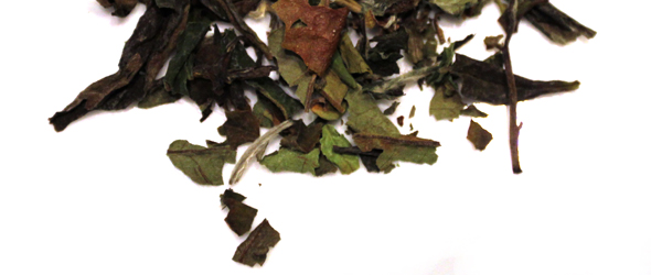 Review: White Peony (Bai Mu Dan), Tea Horse